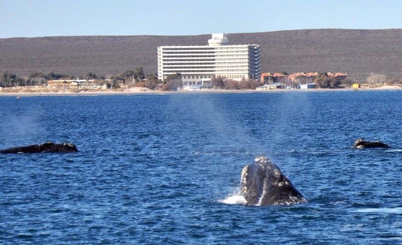 Resultado de imagen para Parques nacionales marinos en Argentina