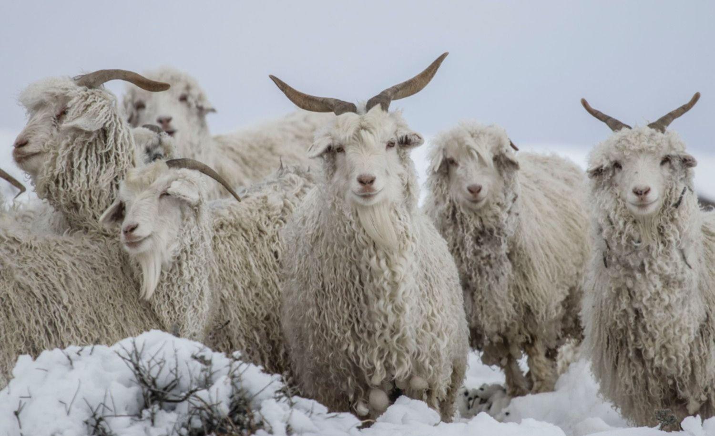 Confederaciones Rurales pide paliativos para los productores de ...