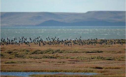 El Patagonia Eco Film Fest 2020 llegará a toda la Argentina de forma online  y gratuita
