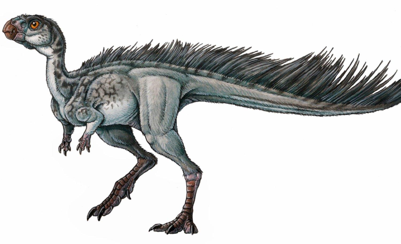 Estudian El Reemplazo De Dientes En Un Pequeno Dinosaurio Del Jurasico De Chubut Dinosaurios con cadera de ave. estudian el reemplazo de dientes en un